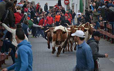 Fiestas San Blas de Valdemorillo