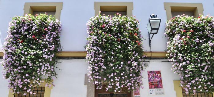 Concurso de Rejas y Balcones de Córdoba