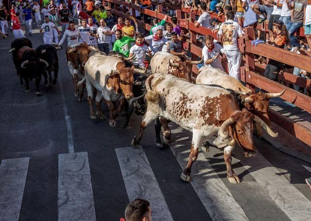 Fiestas y Encierros de San Sebastián de los Reyes