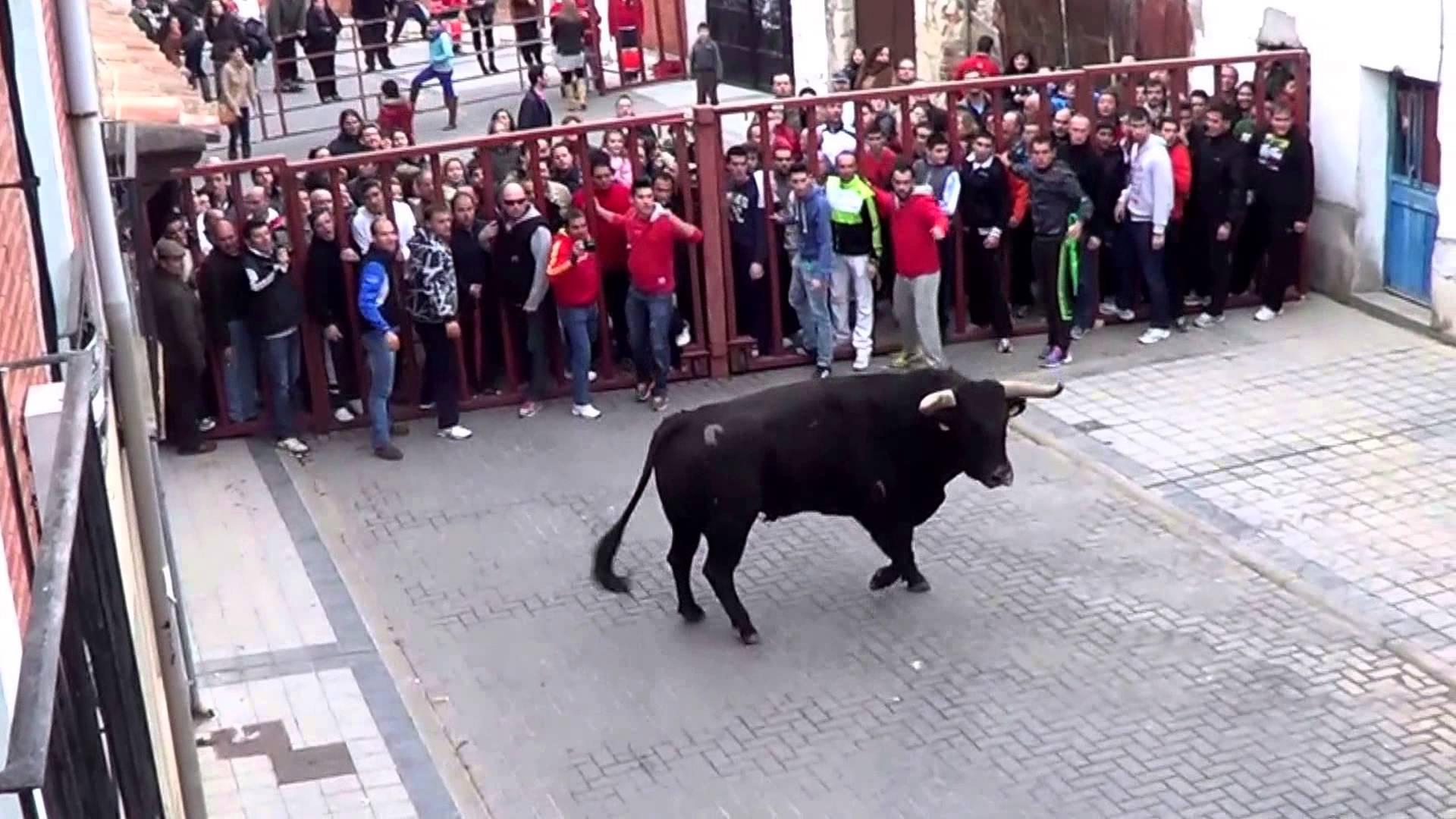 Fiesta San Martín de Traspinedo