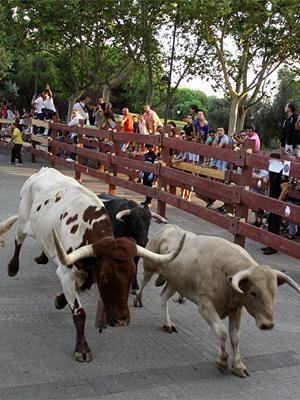 Villalpando – Festejos Taurinos
