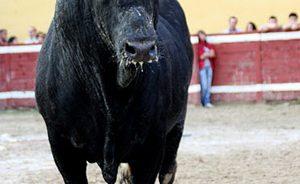 Vall d'Uixó, festejos taurinos, calendario taurino
