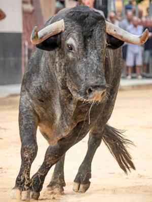 Cáceres – Festejos Taurinos
